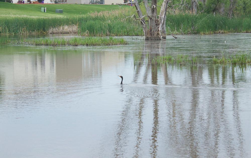 Blue Sky Daycare home daycare kids spotted a cormorant on a nature walk