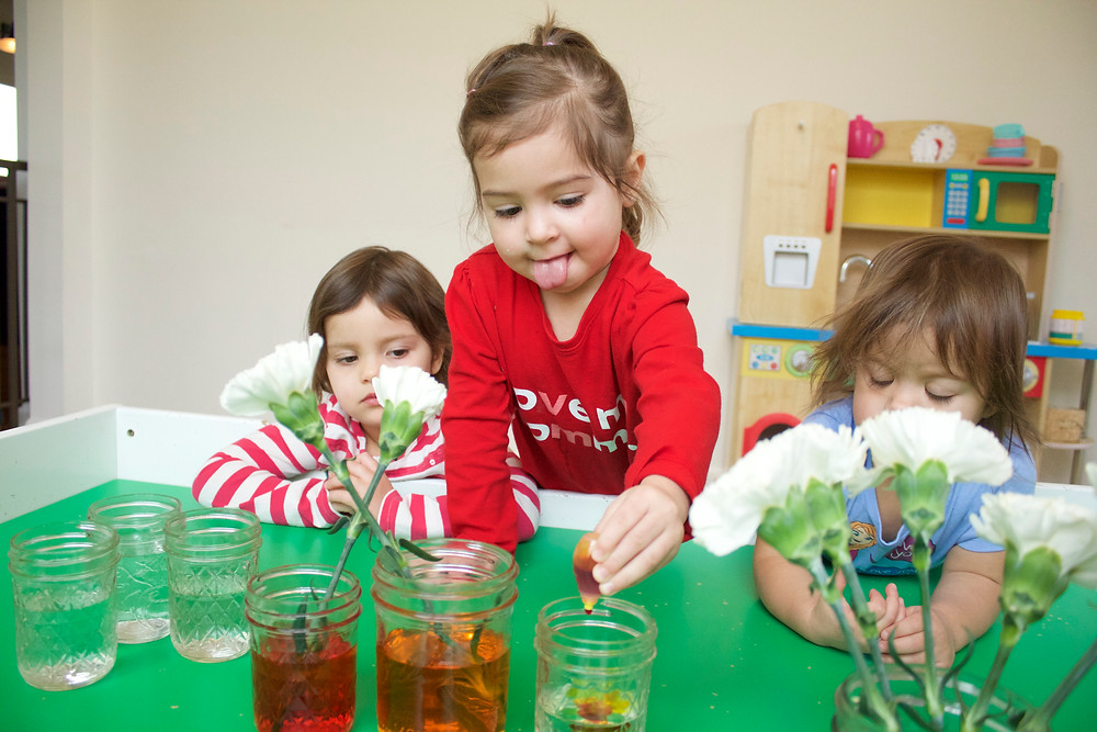 Learning about plants at Blue Sky Daycare home daycare