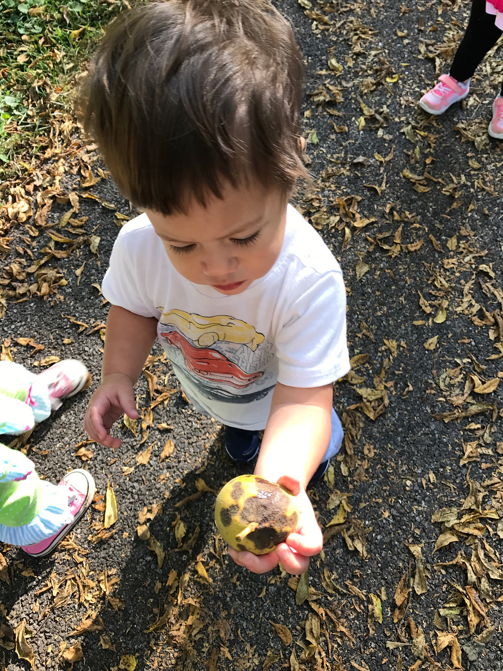A Blue Sky Daycare child finds a walnut.