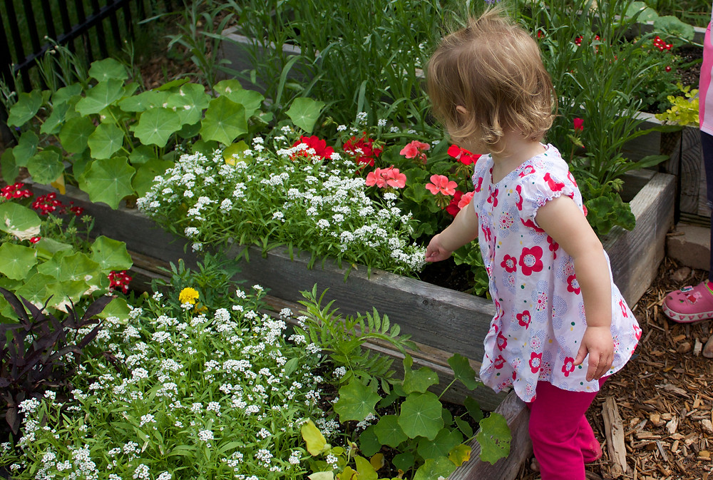 Discovering favorite flowers in the Blue Sky Daycare home daycare garden