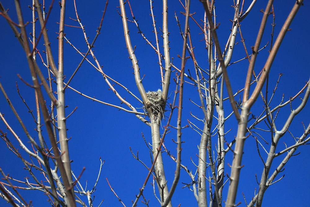 Nest spotting on a nature walk at Blue Sky Daycare home daycare