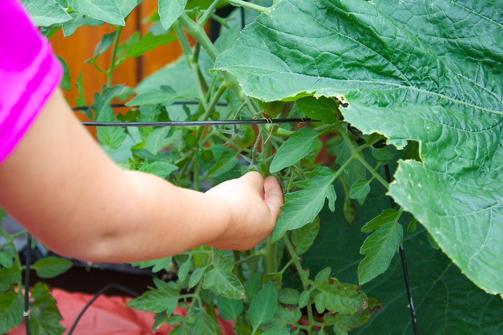 Blue Sky Daycare home daycare kids find vegetables growing in the garden