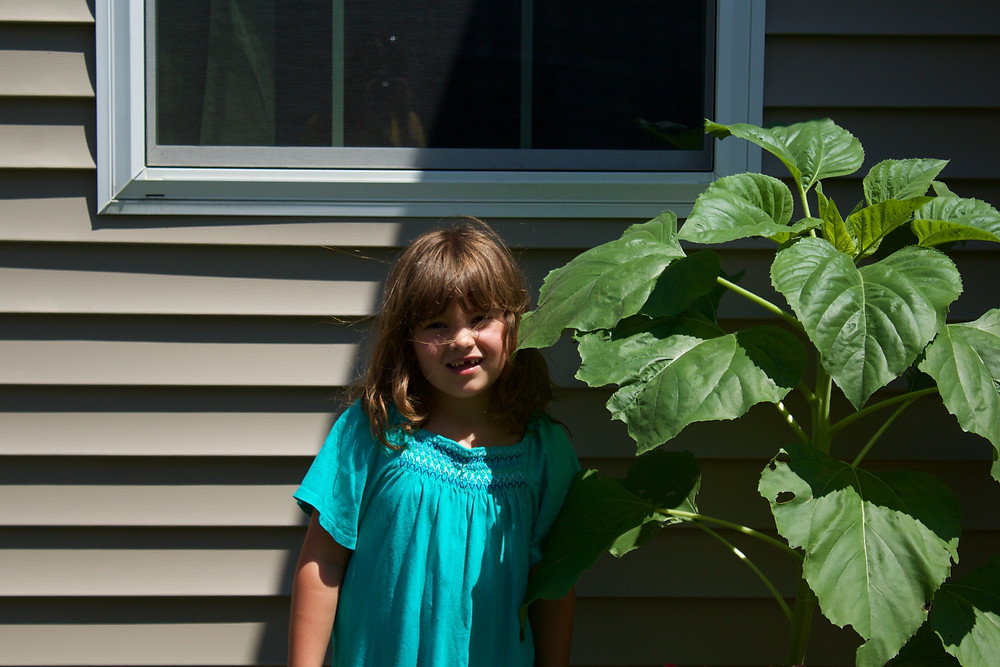 A Blue Sky Daycare child measures up against a sunflower plant