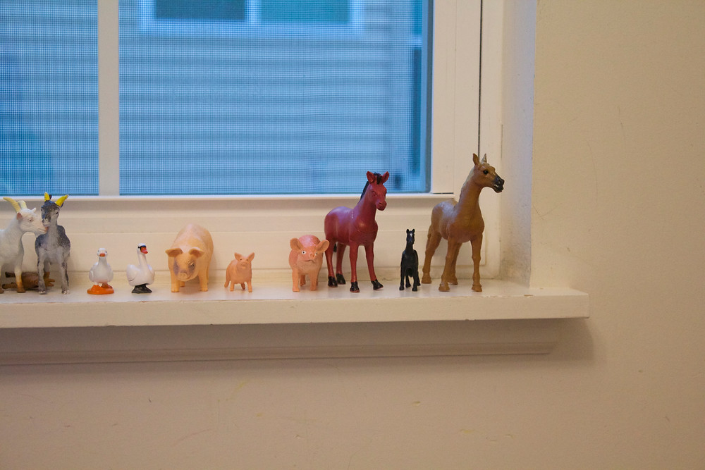 """Animal """"families"""" grouped by a Blue Sky Daycare home daycare child"""