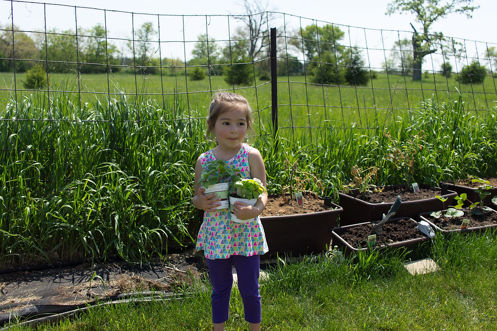A Blue Sky Daycare child helps plant herbs and vegetables in the garden.