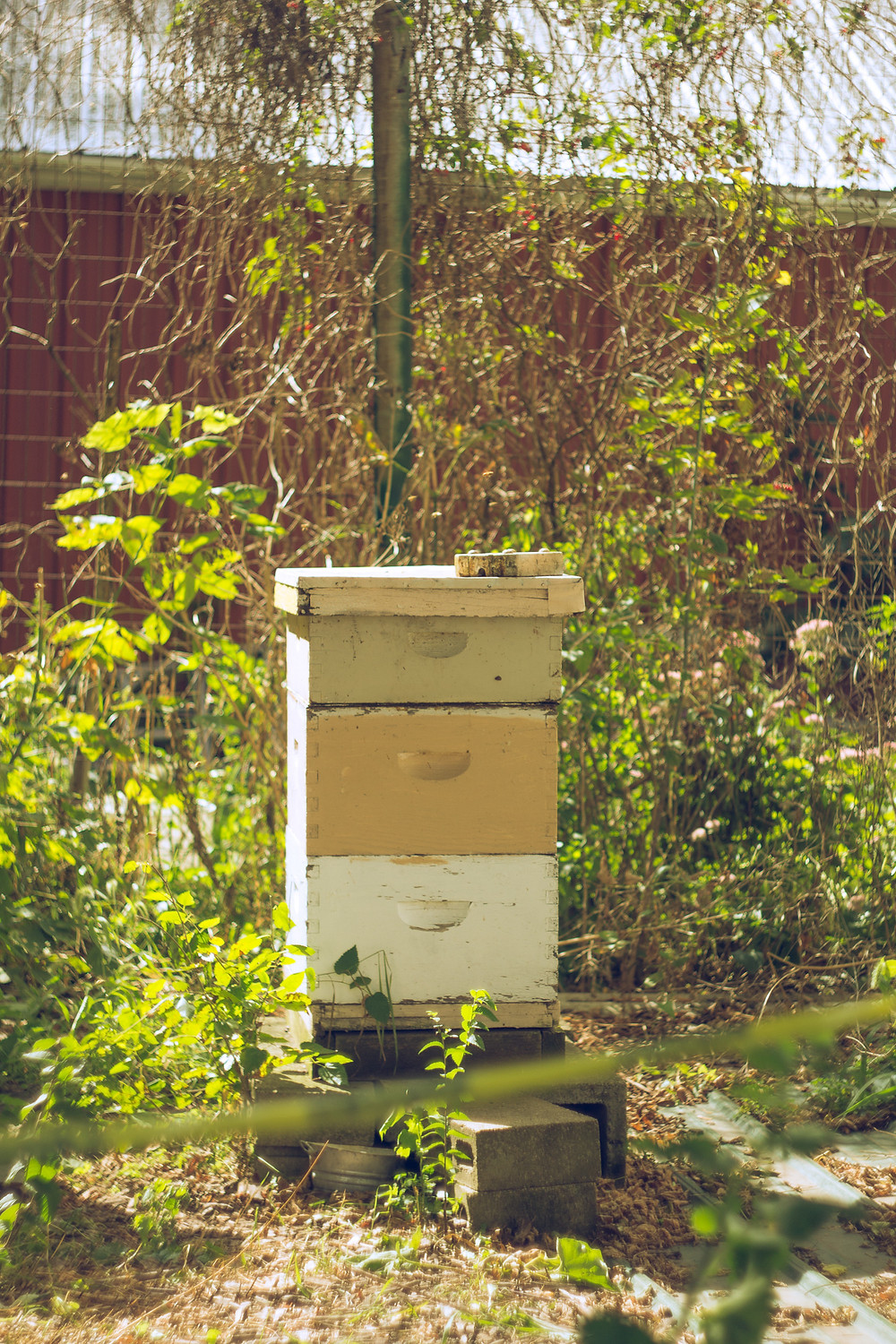 Honeybees living at the Homestead Orchard