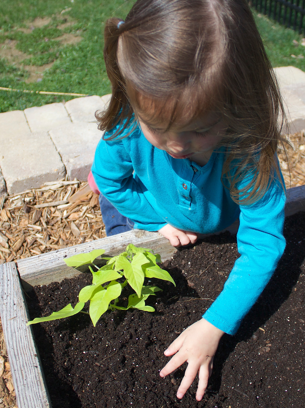Blue Sky Daycare home daycare child gets involved in gardening