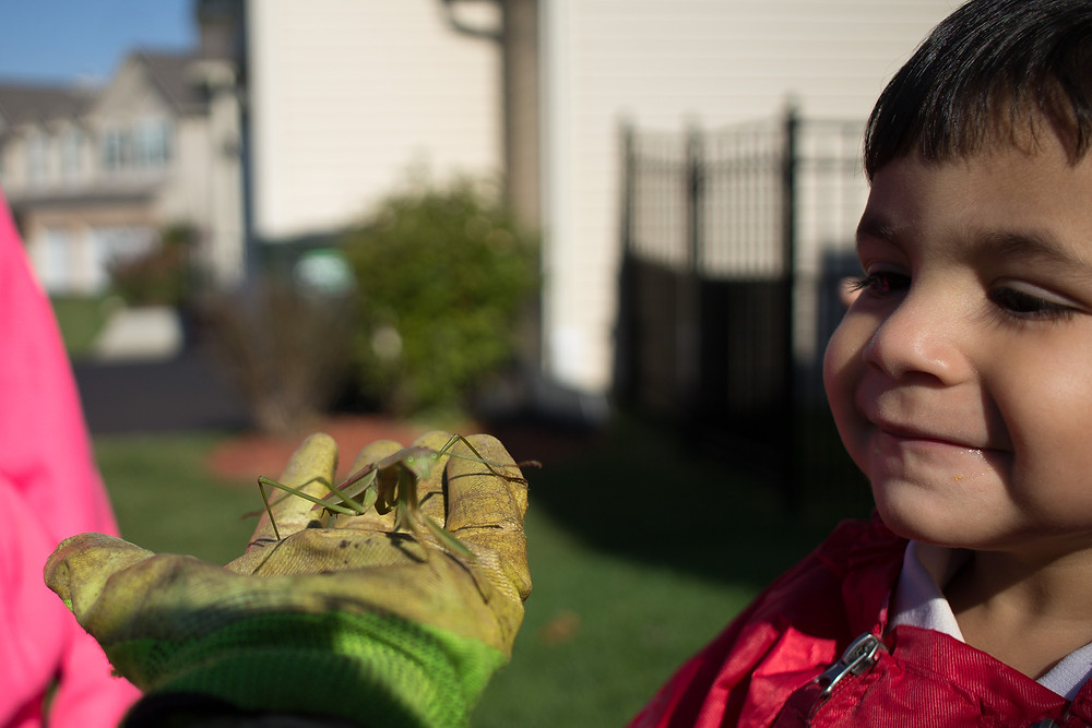 Blue Sky Daycare children interact with a praying mantis they found
