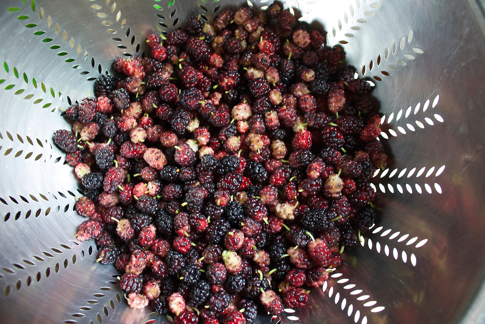 Mulberries picked by Blue Sky Daycare home daycare children