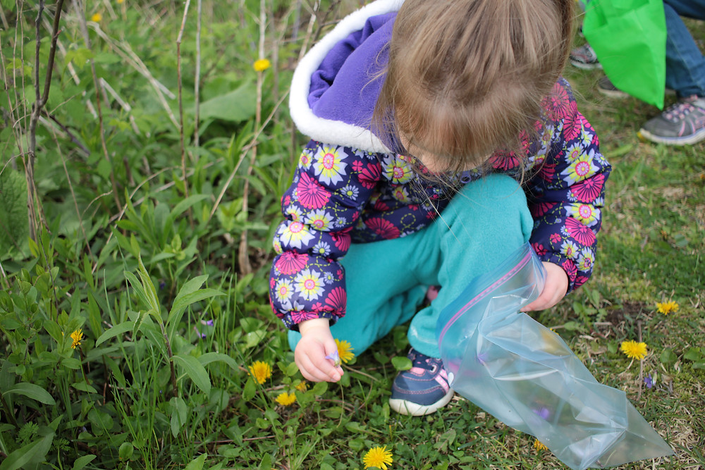 Blue Sky Daycare children gather violets to make jelly for a Mother's Day gift.