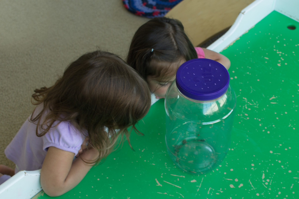 Blue Sky Daycare children look on as a spider devours its prey