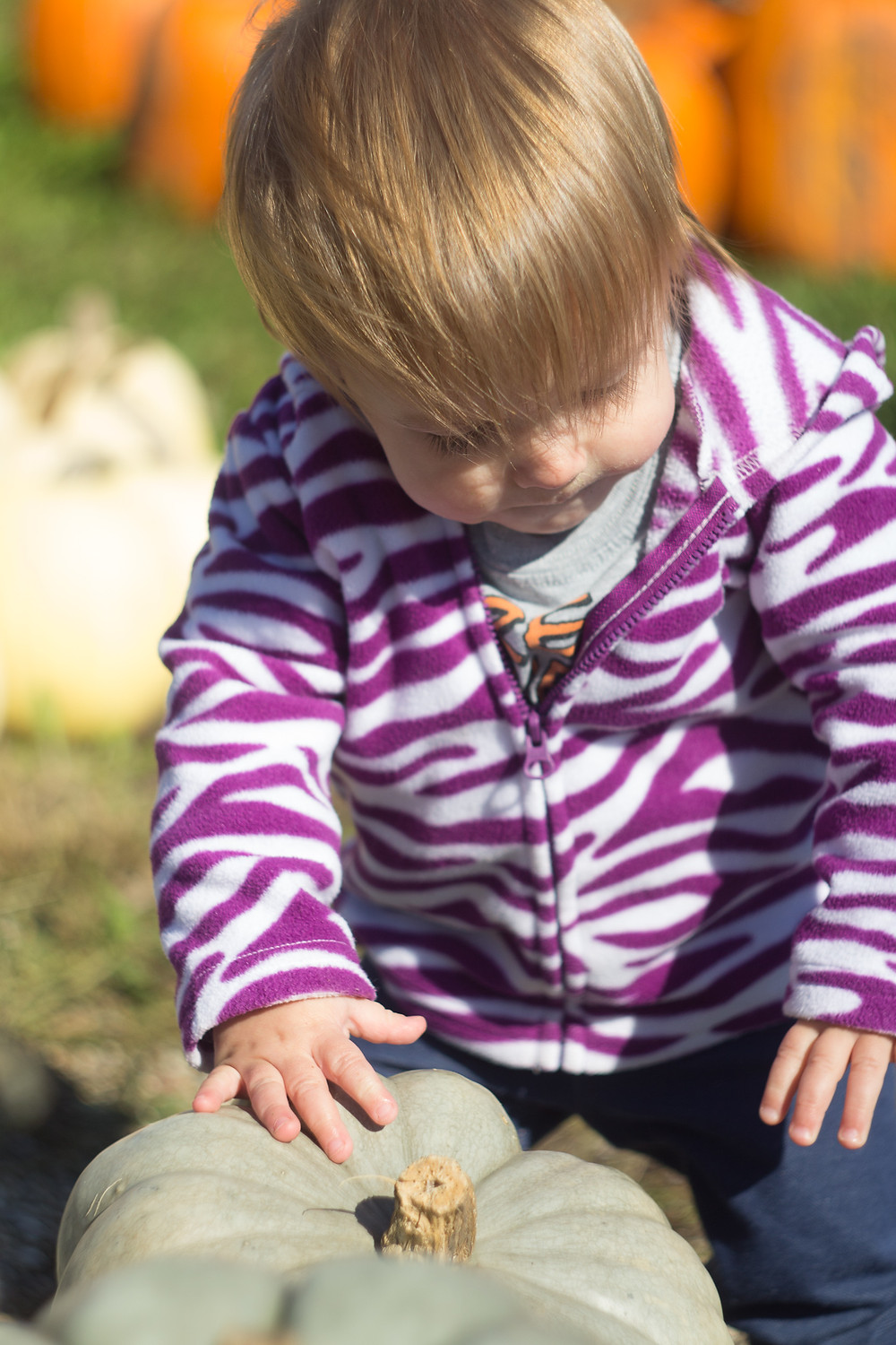 A Blue Sky Daycare child inspects a pumpkin.