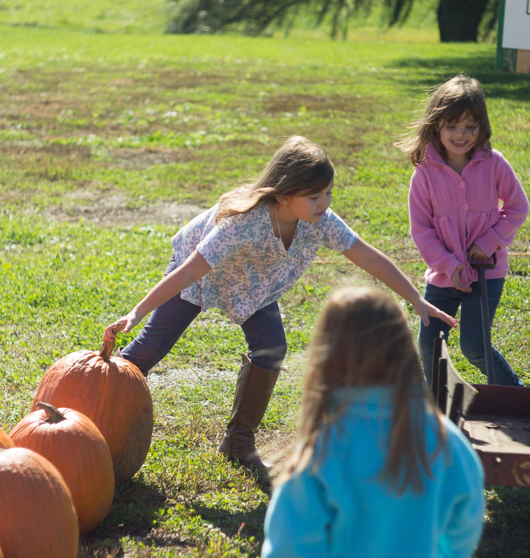 Pumpkin Patch Field Trip Fun!