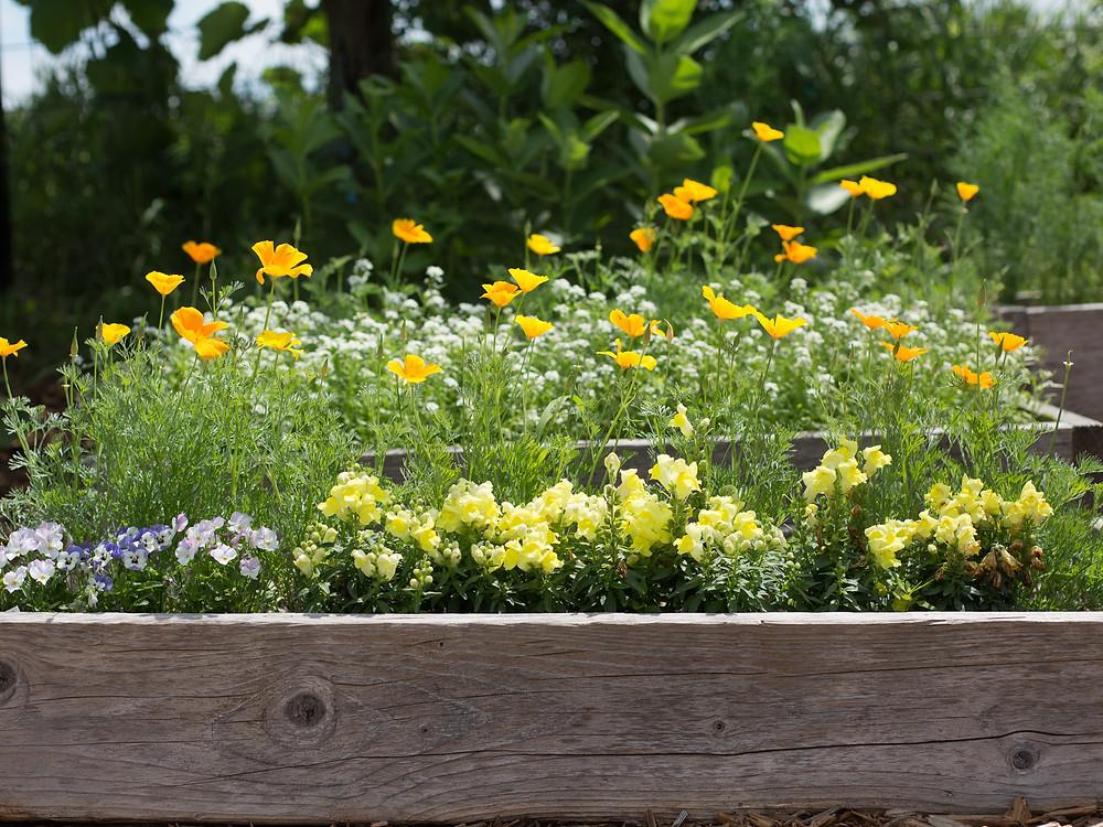 The children's flower garden at Blue Sky Daycare