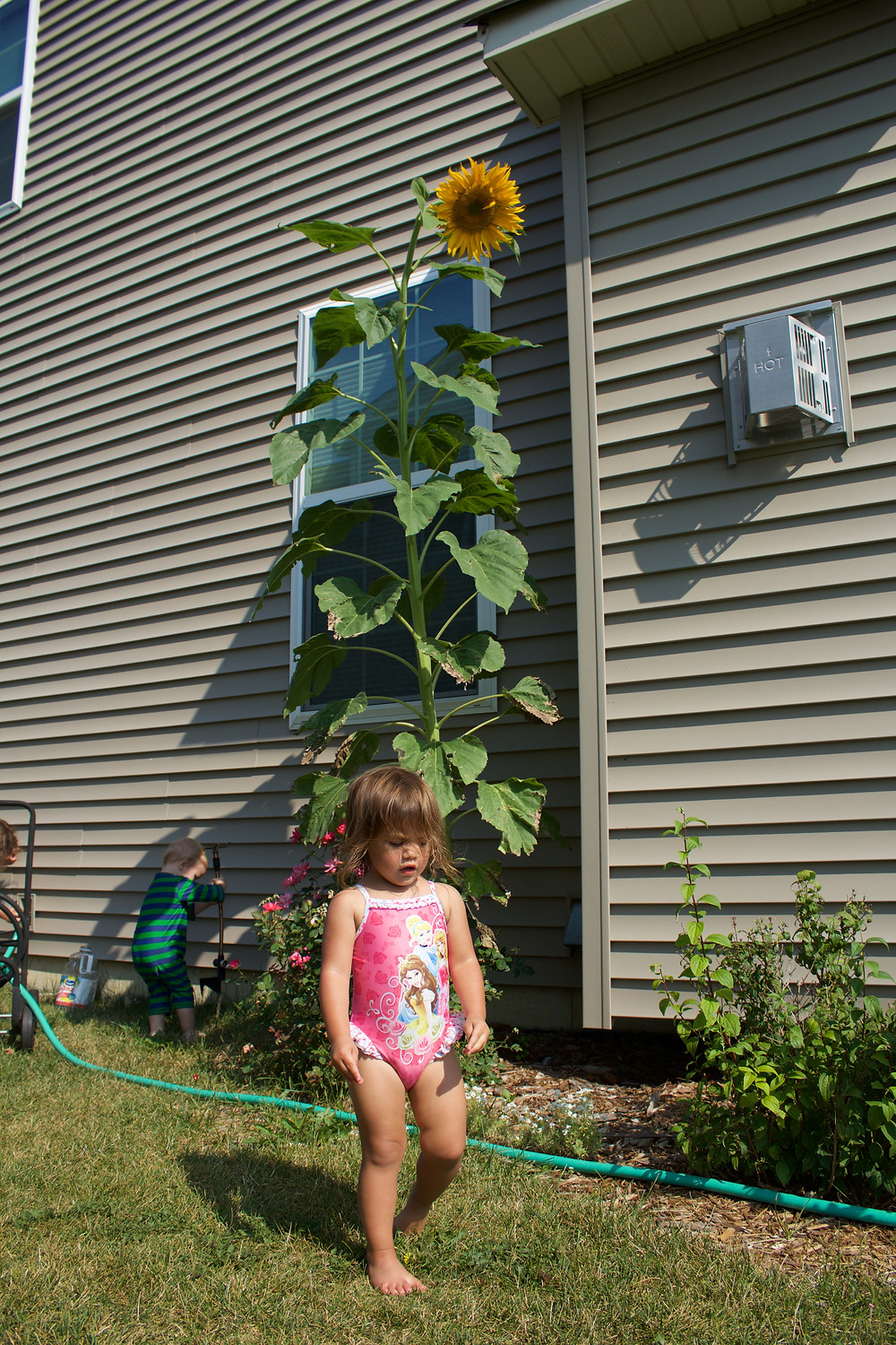 Blue Sky Daycare home daycare children are dwarfed by a giant sunflower