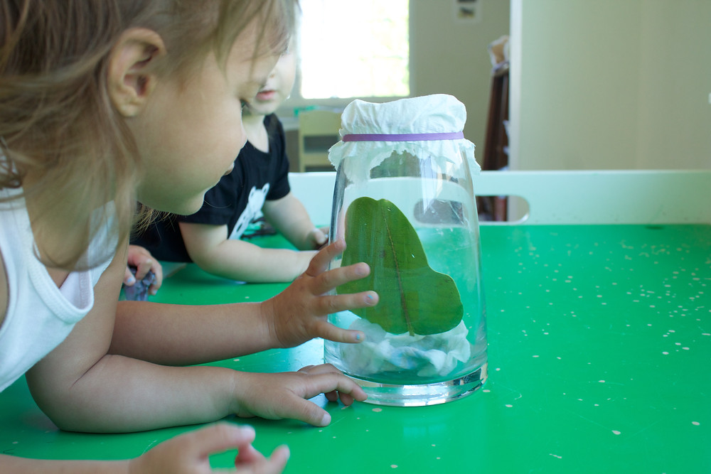 Blue Sky Daycare home daycare children examine Monarch butterfly caterpillars