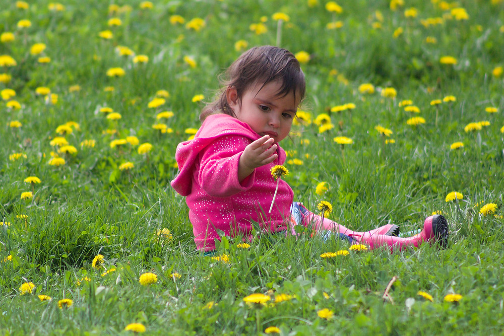 Picking flowers at Blue Sky Daycare home daycare