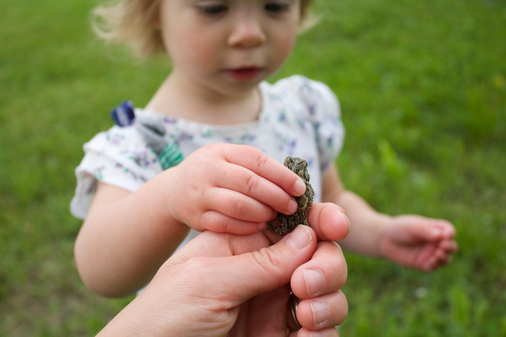 A Blue Sky Daycare home daycare child learns about toads