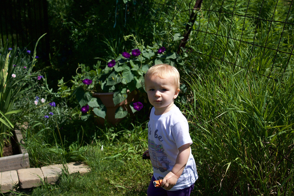 A new Blue Sky Daycare child explores the flower garden