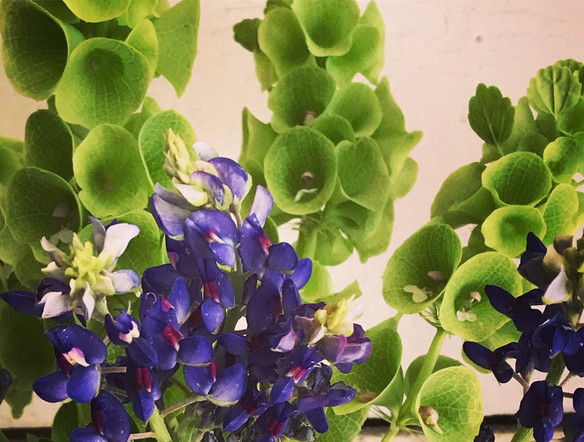 Bells of Ireland with lupine