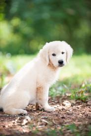 puppy 1emory_1.jpg