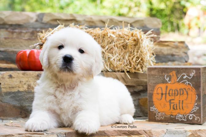 Puppy5Fcr.jpg