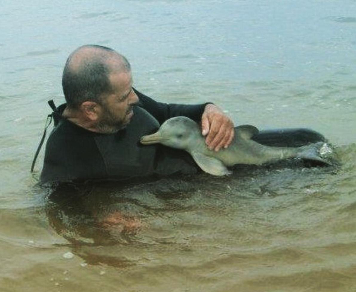 Two headed dolphin turkey