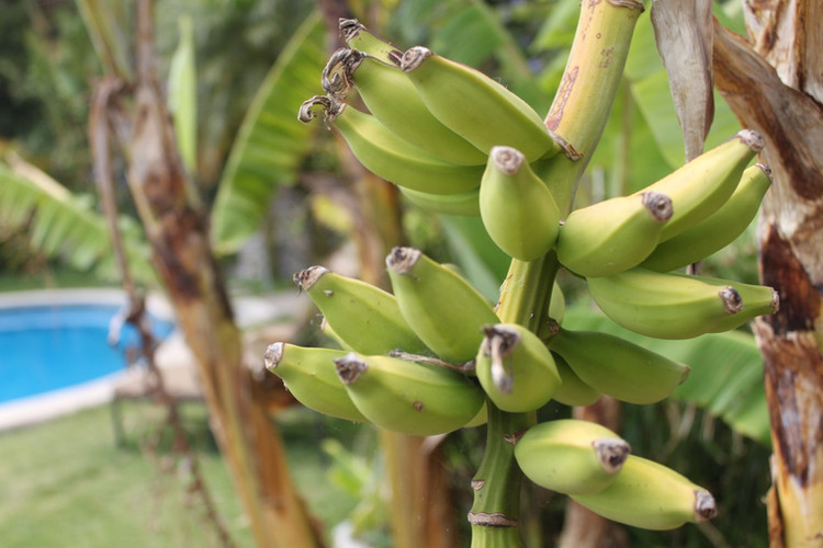 amazing fresh fruit