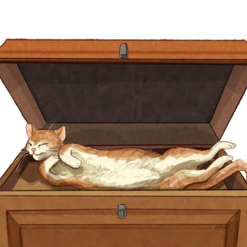 04 def gatto nella madia.jpg