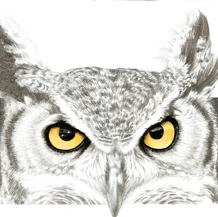 californian_owl_by_m2mazzara.jpg