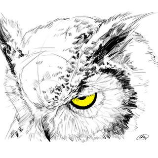 owl_by_m2mazzara-d9ktgdn.jpg