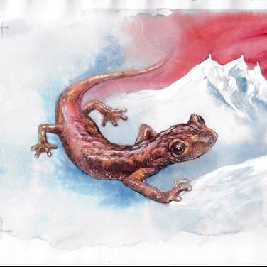 Fauna nazionale in pericolo di estinzione - Serie EUROPA 2021