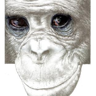 bonobo_by_m2mazzara.jpg