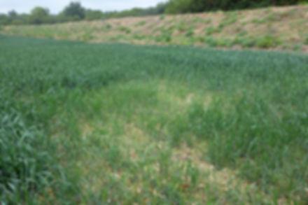 Aménagements hydrauliques sur parcelle agricole (62)