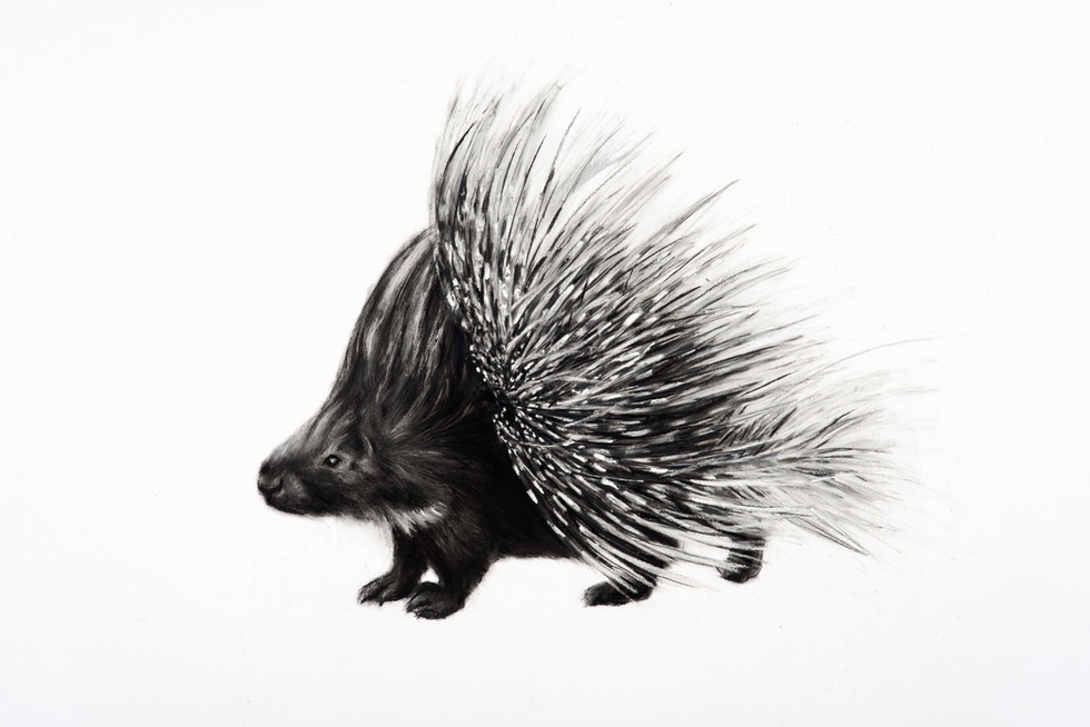Charcoal Porcupine Quiff by Lucy Boydell