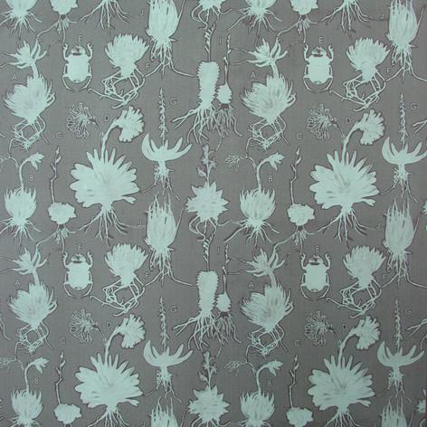 Liliaceae lichen