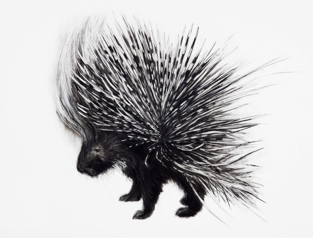 Charcoal Porcupine by Lucy Boydell