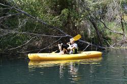 Le guide et son chien