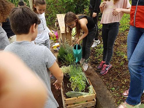 Installation des jardinières