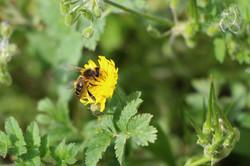 L'éveil des abeilles