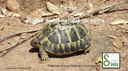 """Conférence """"Tortue"""""""