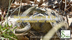 """Conférence """"Reptiles"""""""