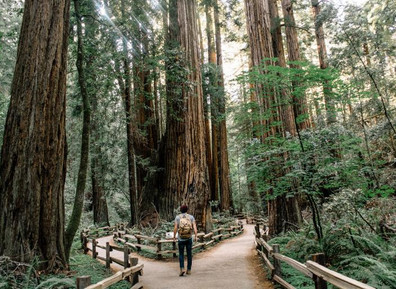 Cathedral of the Woods: the Ancient Magic of the Redwoods