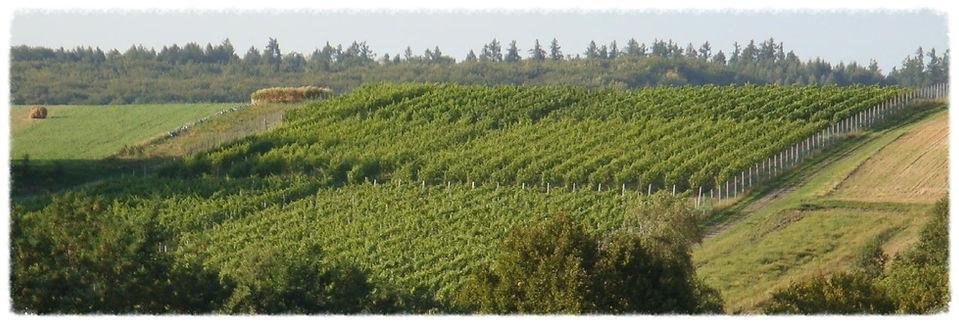 polskie wino, polskie wina, winnica małopolska, winnica kraków, polish wine, polish vineyard