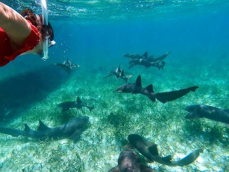 Belize - Dem Paradies ganz nah