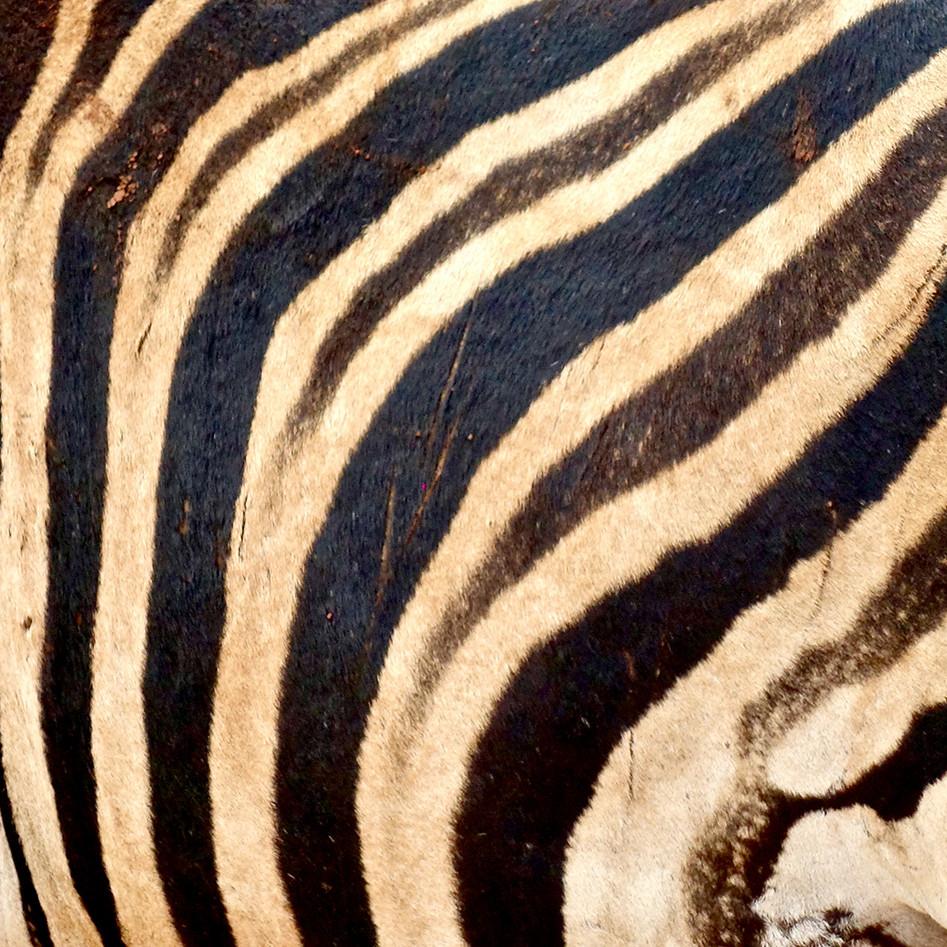 Muster_Zebra.jpg