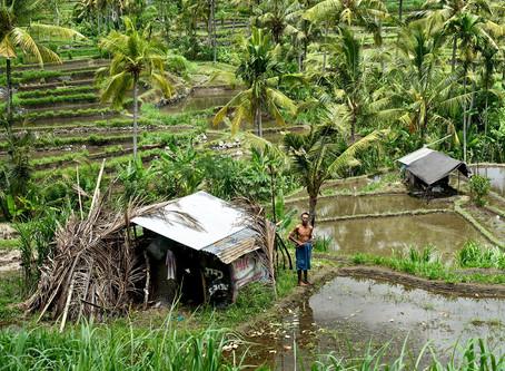 Indonesien - Die Scheinwelt Balis