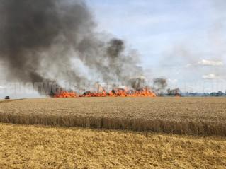 Flächenbrand mittel, Hattendorf, Zum Rißbrink
