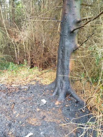 Flächenbrand, Rehren, Steinbeeke