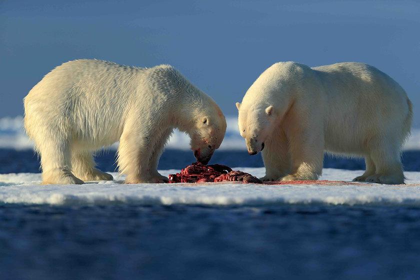 polarbearseatlow-2.jpg